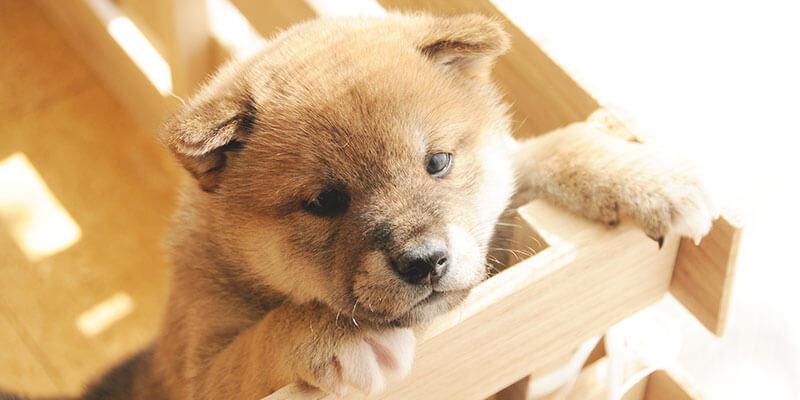 水をたくさん飲む 札幌動物病院検索ナビ